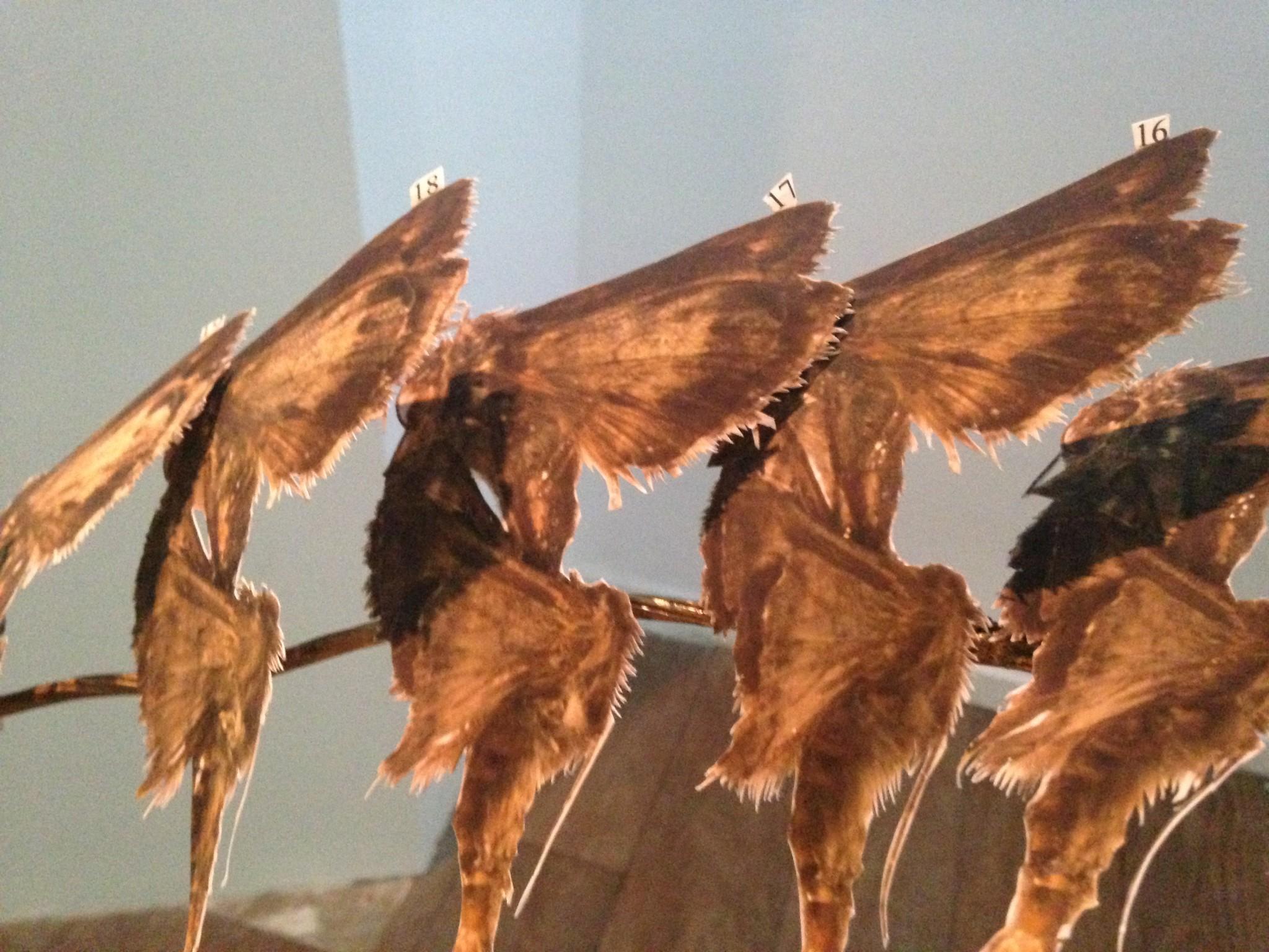 Mitz - Butterflys detail