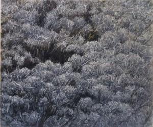Hadar Gad Untitled 50x60 cm. 2014