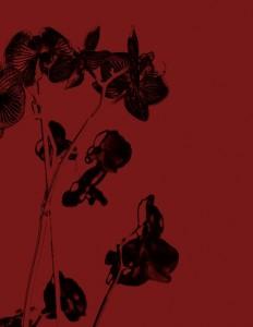 דוד עדיקא,  ללא כותרת, 2012  (דיפטיך) , תצריב צילומי ואקווטינטה
