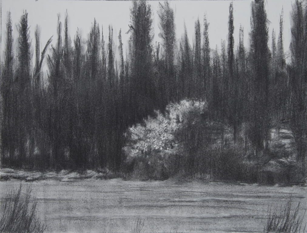 יער בן שמן 2017